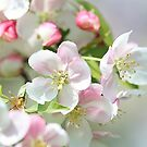 Blooming Softly by Monnie Ryan