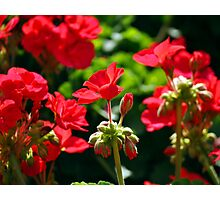 Flowers Photographic Print
