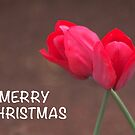 Merry Christmas Tulips by Elysian Photography ~ Art from the Heart