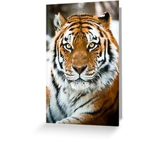 Amur Tiger Greeting Card