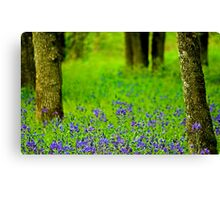 A Little Bit Of Spring Canvas Print
