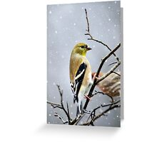 Christmas Goldfinch Art Greeting Card