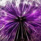 purple fairy by clayton  jordan