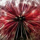 red fairy by clayton  jordan