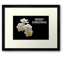 Merry Christmas Daffodil Framed Print