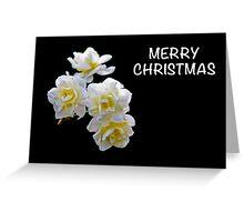 Merry Christmas Daffodil Greeting Card