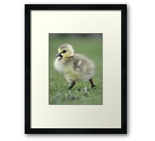 Momma wait for me!!! Framed Print
