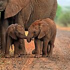 Baby Elephants holding Trunks by Paul Mayall