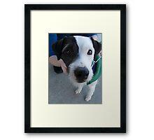 zack, the neighbor dog Framed Print