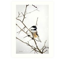 Charming Chickadee Winter Bird Art Print Art Print