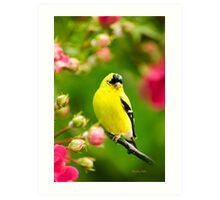 Garden Goldfinch Colorful Bird Art Art Print