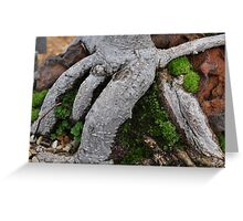 Tree trunk.. Greeting Card