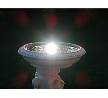 Sunny Bird Bath Photographic Print