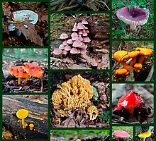 Pennsylvania Mushrooms Collage #2 by MotherNature