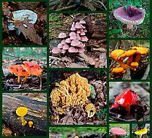 Pennsylvania Mushrooms Collage #2 by MotherNature