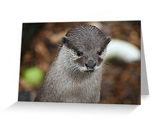 Otter at Longleat Greeting Card