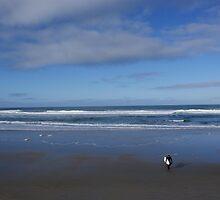 St Clair Beach - Dunedin by Sheryl Marshall