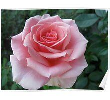 Mozart Rose Poster