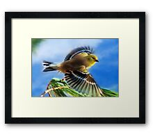 Flying Goldfinch Art Painting Framed Print