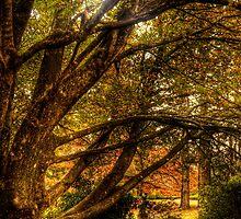 Fairytale - Bisley Gardens - Mt Wilson  Australia by Brad Woodman