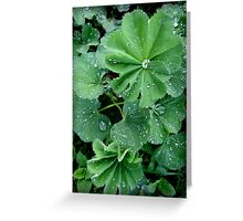 Lady's Mantle in Connecticut Greeting Card