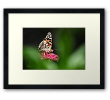 Painted Lady Butterfly Art Framed Print