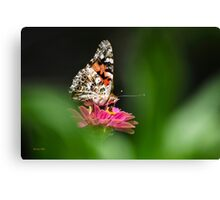 Painted Lady Butterfly Art Canvas Print