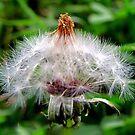 The Flower Fadeth by aprilann