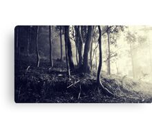 Yarramalong Autumn morning 2 Canvas Print
