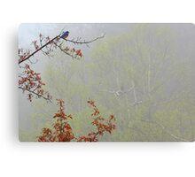 Bluebird - Foggy Morning in May Canvas Print