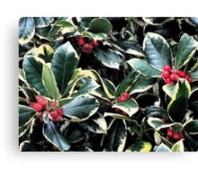 Holly Berries and Leaves Canvas Print
