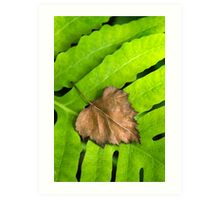 Old and New Leaf Abstract Art Print