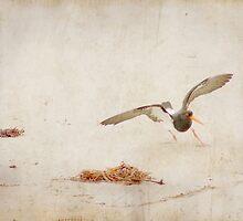 Oyster Catcher - Ocean Beach by pennyswork