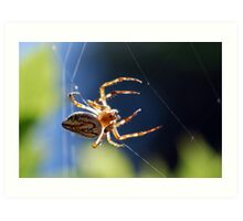 Another Spider... Art Print