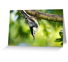 White Breasted Nuthatch Wild Bird Art Greeting Card