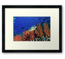 Hawksbill Habitat  Framed Print