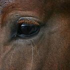 "The ""Eye"" has it.... by Mary Fox"