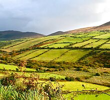 Irish Countryside by Mary Fox