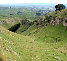 Te Mata Peak by John Sharp