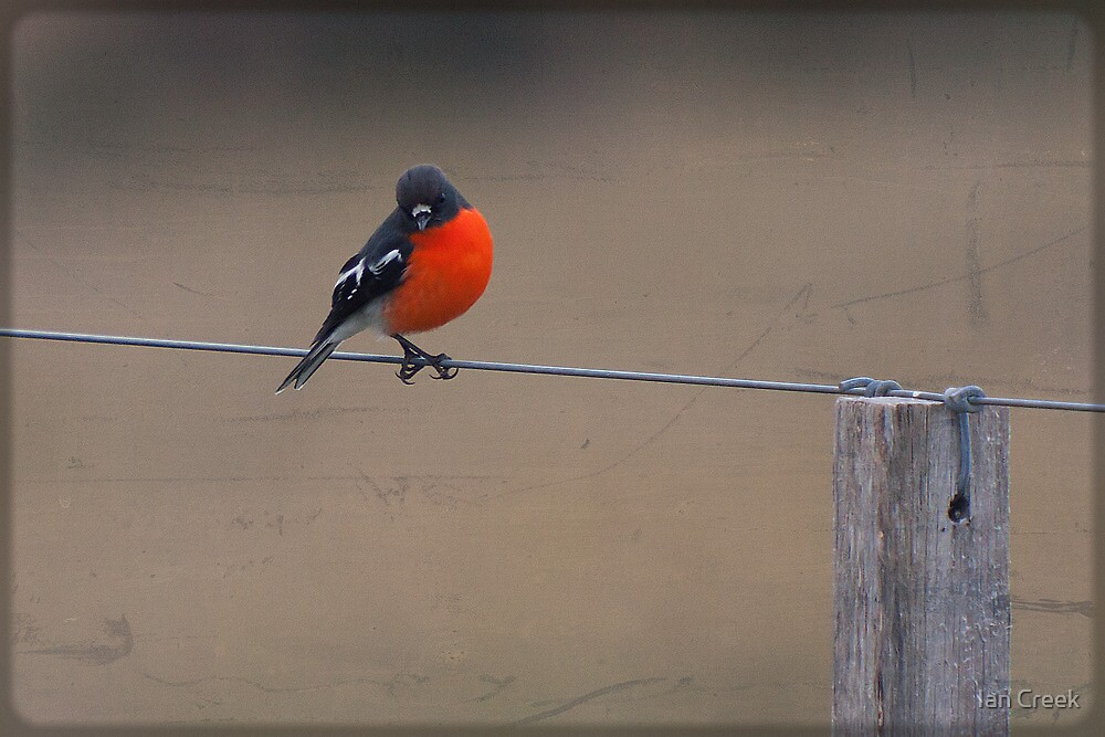 On A Wire by Ian Creek