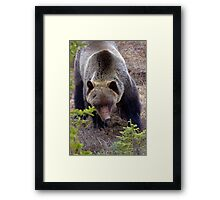 You Lookn' at Me? Framed Print