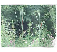 Cattail Poster