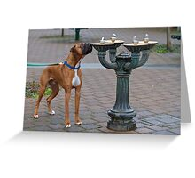 Henry the Boxer Greeting Card