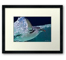 Penguin Swimming Framed Print