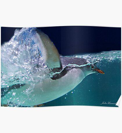 Penguin Swimming Poster