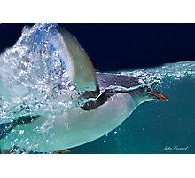 Penguin Swimming Photographic Print