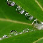 Pretty Drops All in a Row by Kate Hibbert