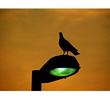 Streetlight Photographic Print