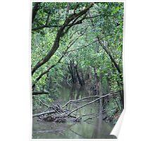 The Creek, on the way to Cedar Grove, Queensland,Australia Poster