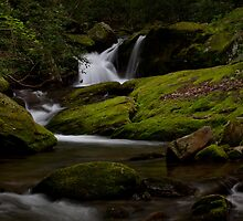 Somewhere In Barnardsville by Forrest Tainio